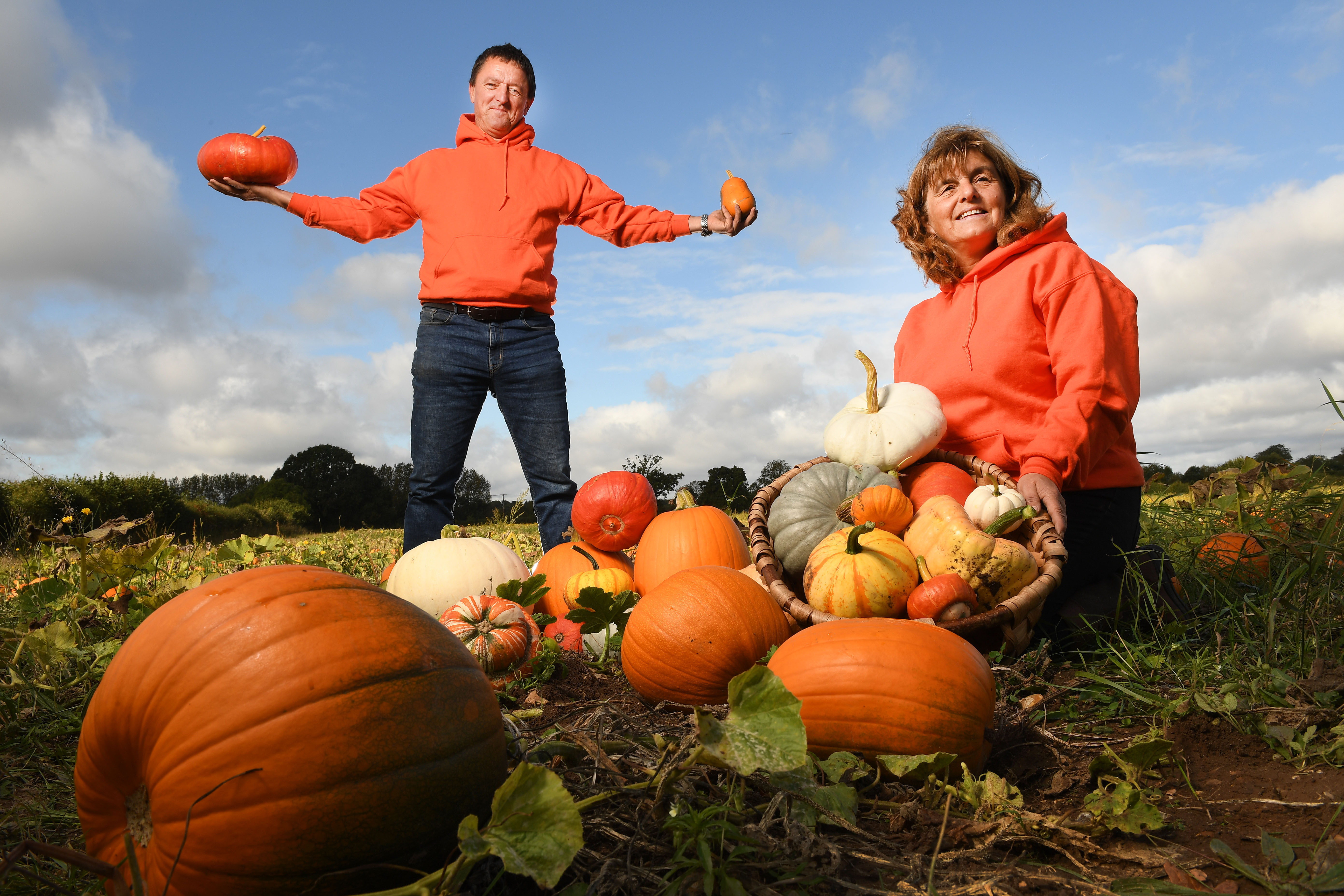 west sussex pumpkin patches