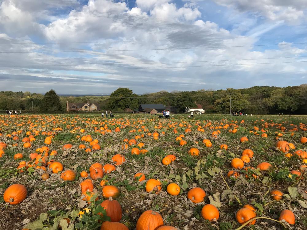 tulleys pumpkin patch