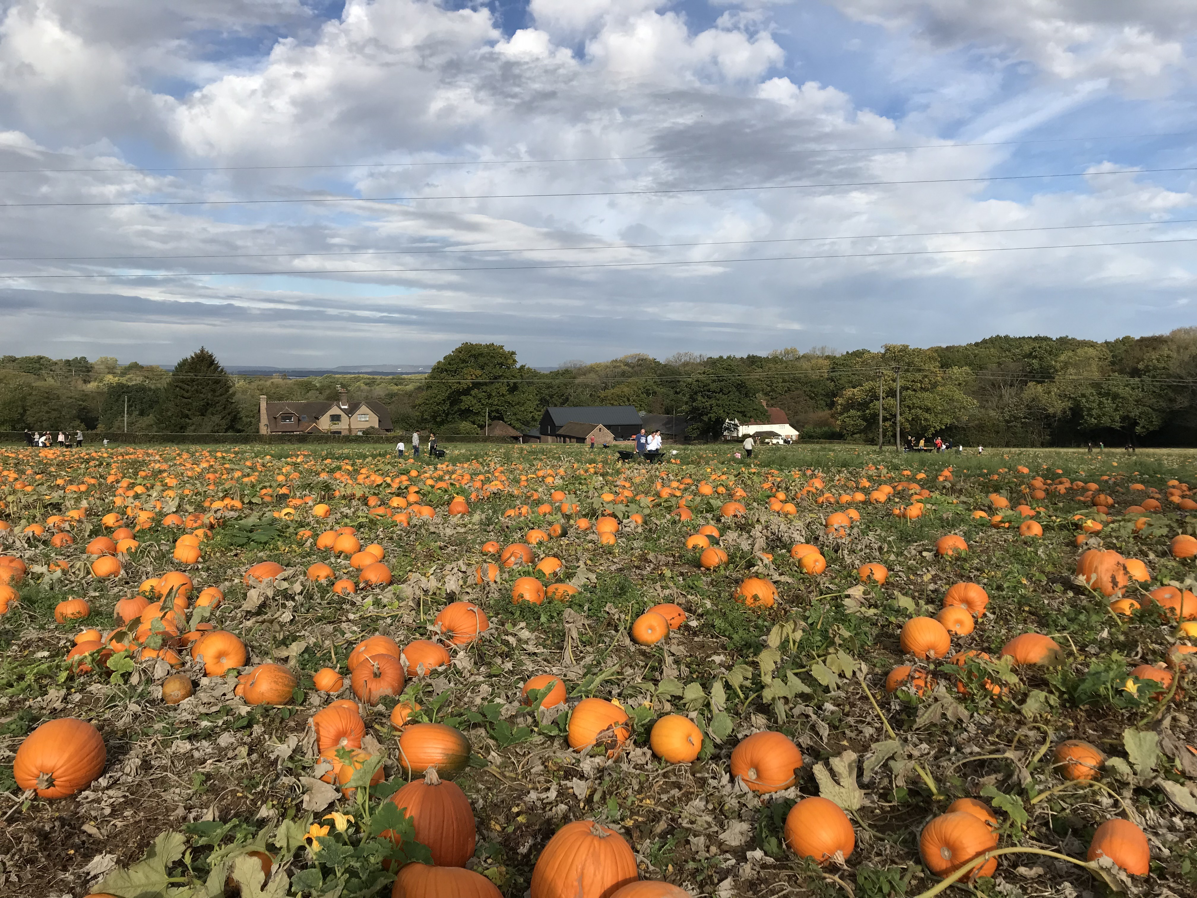 tulleys pumpkin patches