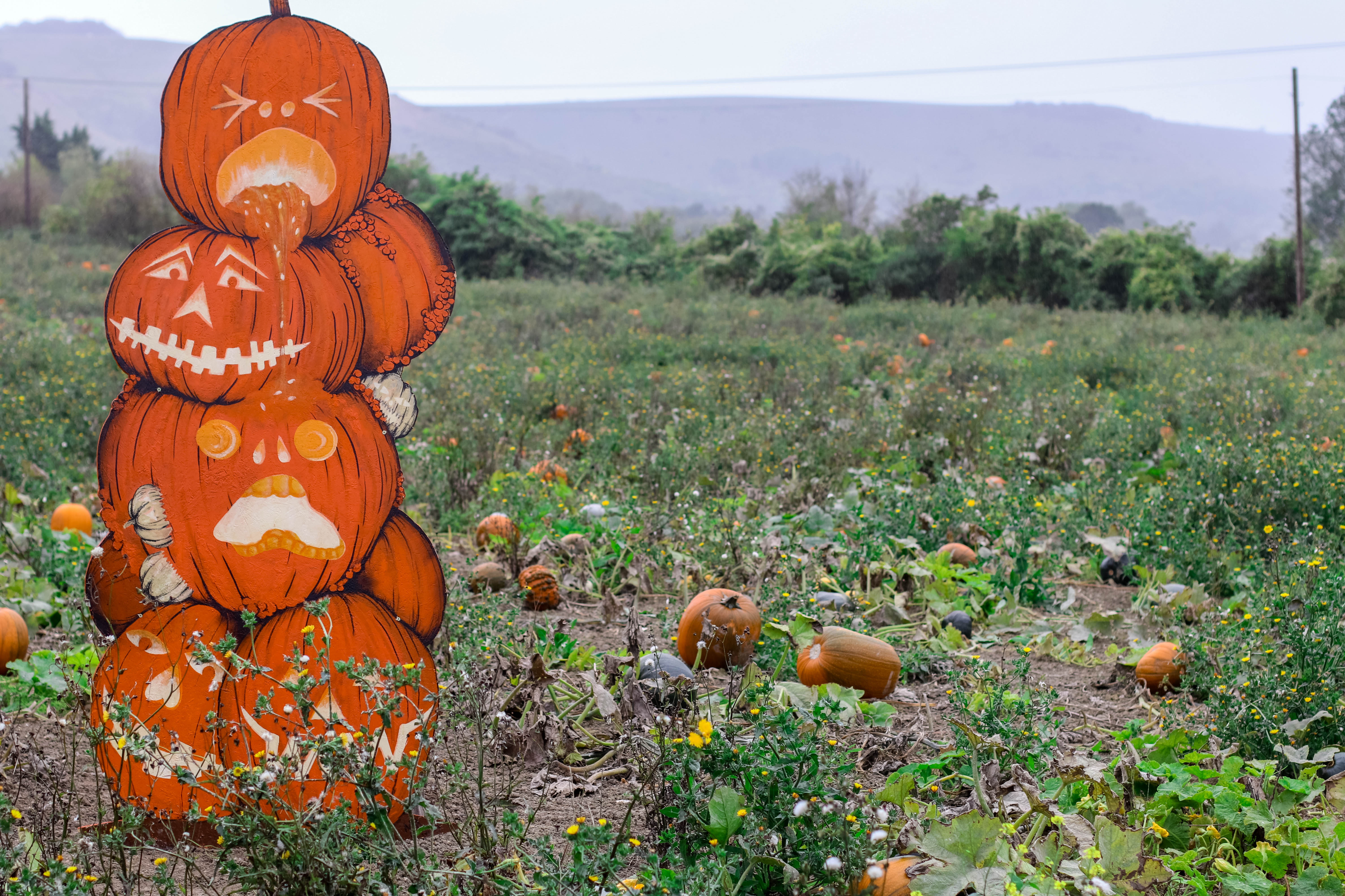 pumpkin patches in west sussex