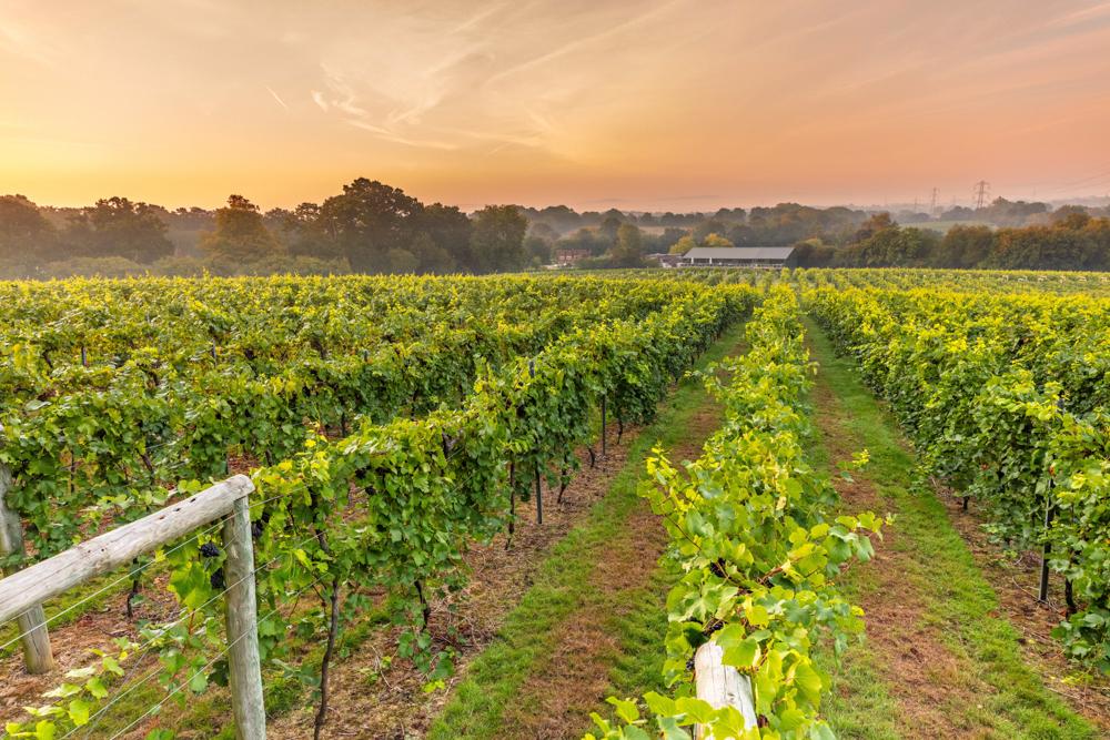 dinner at dusk bolney wine estate