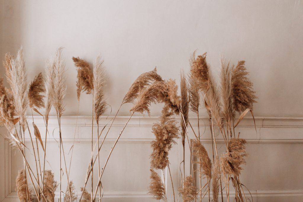 pampus grass for the home