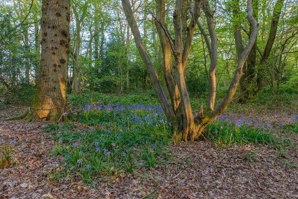 harewood Surrey